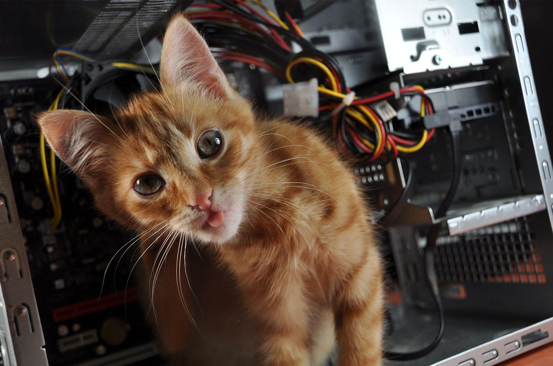 Gatto su un computer